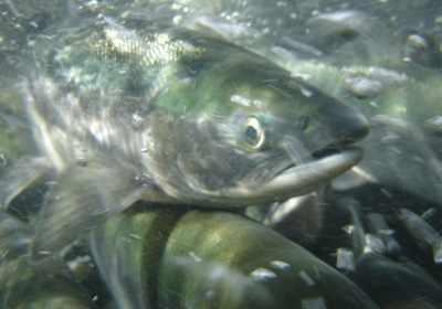 Cargill Nets A Norwegian Salmon Feed Producer For $1.5 Billion