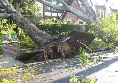 A Tree Crash Landed On My Business — What Do I Do?