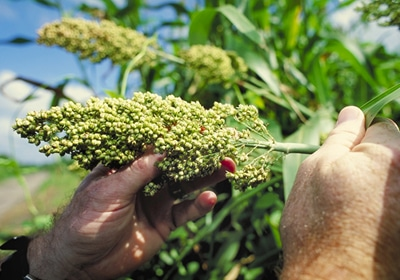 Land O'Lakes To Buy Agricultural Biotech Company For $17.2M