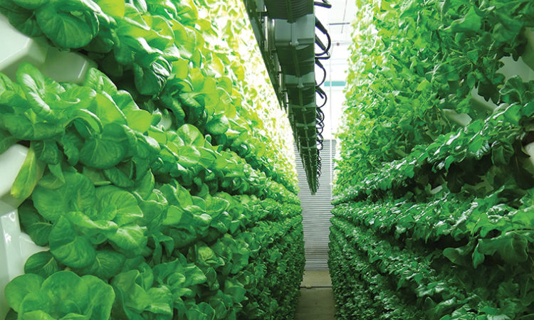 Living Greens Farms Closing In on $12 Million Series A