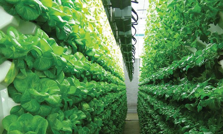 Living Greens Farm is Hooked on Aeroponics