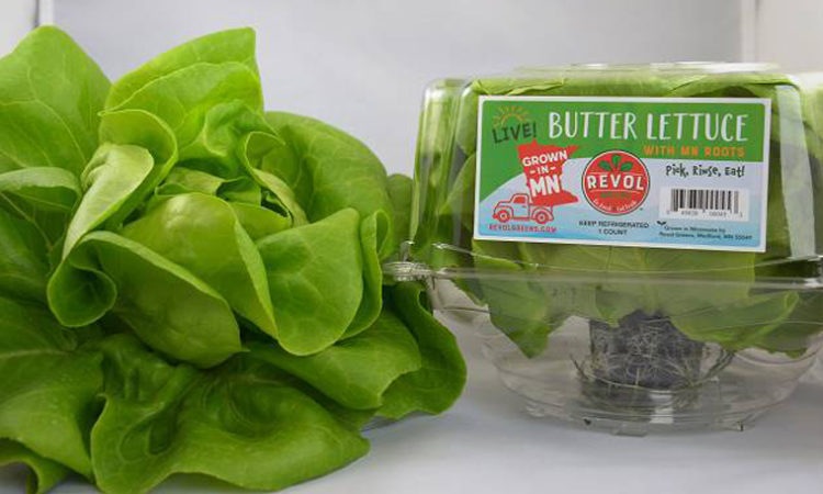 Greenhouse Vegetables Supplier Revol Greens Plans to Expand After $11M Sale of Its Facility