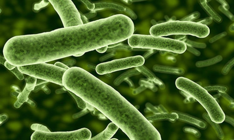 U of M to Lead $500K Effort at Unlocking Secrets of Plant Microbiomes