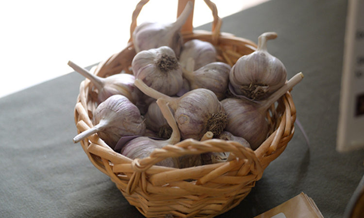 Could Minnesota Become the King of Garlic?
