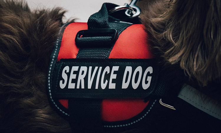 Eagan Trucking Company to Settle Suit for Charging Service Dog Fee