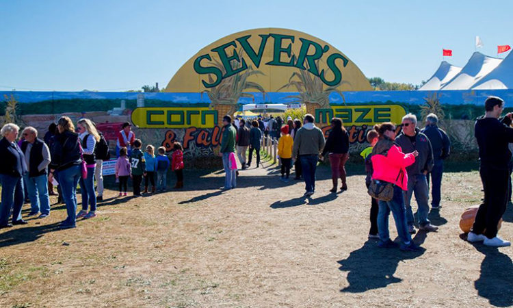 Sever's Fall Festival Finds Permanent Home