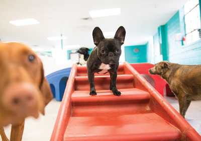 The Big Business Of Doggy Daycare