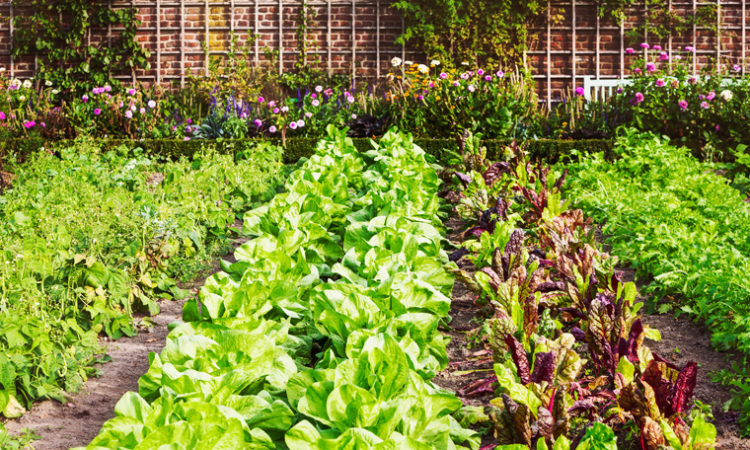 New State Grant Program Awards Quarter Million to Urban Agriculture Projects