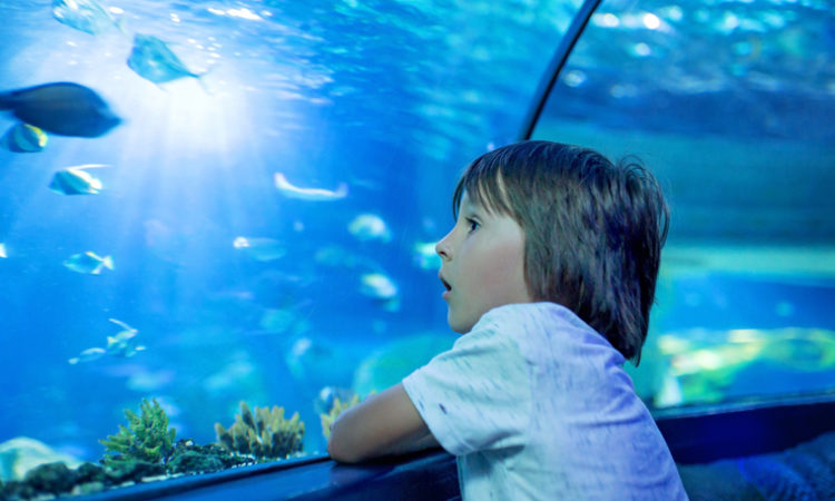 Two-Story Aquarium Coming to Rosedale Center Early Next Year
