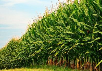 EPA's Lower Ethanol Mandate May Hit Major MN Industry