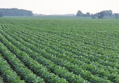 Minnesota Farmers Look To Grow State's Soybean Industry In Vietnam Trip