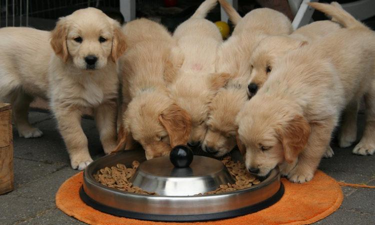 Cargill Buying Ohio-based Pet Food Conglomerate Pro-Pet