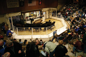 Interstate Partners And The Central Livestock Association: The Ending Of An Era, A Final Farewell