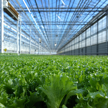 Greenhouse Lettuce Producer Revol Greens Lands $68M in Funding