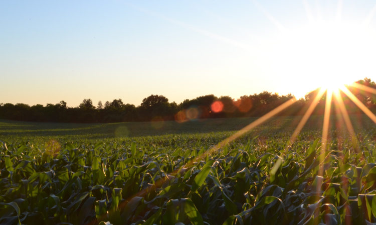 Minnesota Food and Ag Giants Refine Goals for Food Initiative