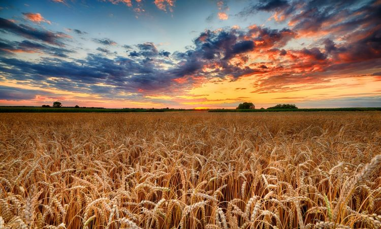 Minnesota Food and Ag Leaders Team Up For World Food Day