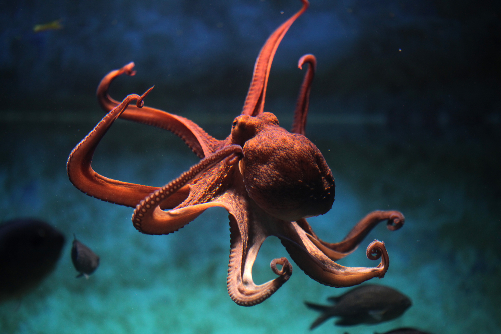 Embracing the Octopus: What 2020 Just Taught us About Work