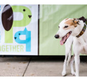 Secondhand Hounds Rescue Merges With People & Pets Together Food Shelf