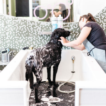 Bubbly Paws Launches National Franchising