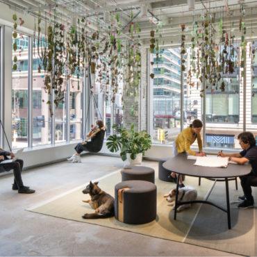 Office Envy: MSR Design